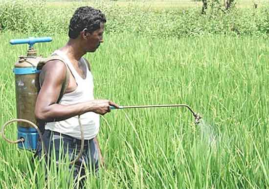 20% of loans in the Agriculture Sector Are Bad Debts